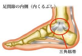 「足首 内側靭帯」の画像検索結果