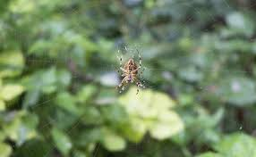 How By Their Spiders Webs To Id frxqfU