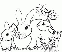 Kleurplaten Baby Konijnen Brekelmansadviesgroep