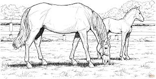 Small Picture Grazzing Mare Horse and Filly coloring page Free Printable