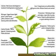 Cannabis Problem Chart Easy Nutrient Deficiency Chart 420 Magazine
