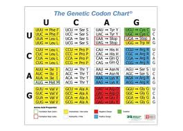 Genetic Codon Poster