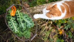 can cats eat kale is kale safe for