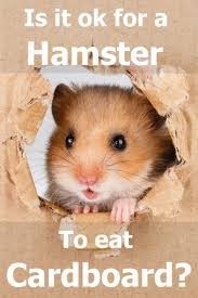 is it ok for a hamster to eat cardboard