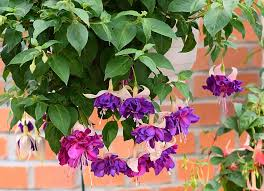 Purple Green 62 Purple Flower Types With Pictures Flowerglossary Com