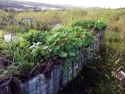 recycled ibc tanks storing water and growing vegetables