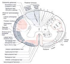 Neuroanatomy Review