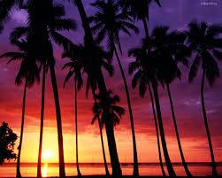 palm trees sunset tumblr. California Palm Trees Tumblr Background - Wallpaper. Sunset S