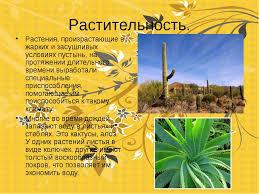 Реферат на тему растения полупустынь и пустынь Интересное в мире  белье реферат на тему растения полупустынь и пустынь физической деятельности
