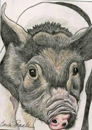 aceo atc original pencil drawing pig farm pet art carla smale