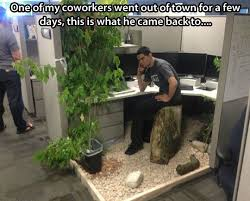 best plants for office cubicle. not sure if prank or awesome makeoveru2026 best plants for office cubicle