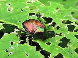 garden pest. Pests And Diseases Garden Pest