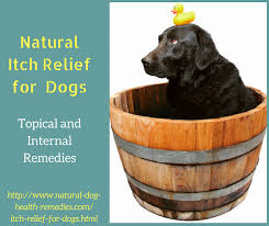 Natural Itch Relief for Dogs | Remedies for Itchy Dog Skin