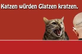 Kolumne Angeklickt Mit Katzen Gegen Glatzen Panorama