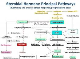The Endocrine Journey Steroidal Hormones Their Pathways