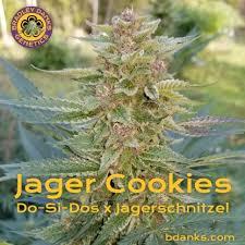Jager Cookie Seeds