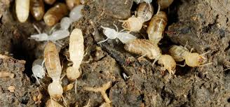 Image result for takes care of the termites