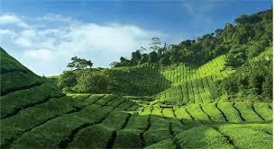 nabu black tea with lemongrass черный чай с лемонграссом в