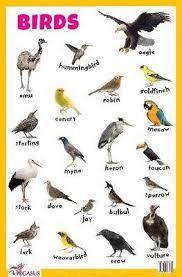 Bird Beak Chart Magrudy Com Birds Educational Chart