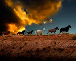 wild horses sunset. Delighful Wild Wild Horses Poster Featuring The Photograph At Sunset By Harry  Spitz On I