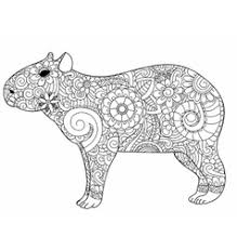 Small Picture Armadillo animal cartoon coloring page Royalty Free Vector