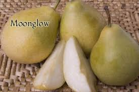 Moonglow Pear Pollination Chart Moonglow Pear Dave Wilson Nursery