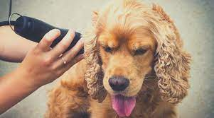best dog grooming clippers for long and