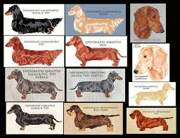 Dachshund Color Chart Details About Dachshund Counted Cross Stitch Pattern Cross