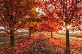 2560x1700 Autumn Fall Season Trees 4k ...