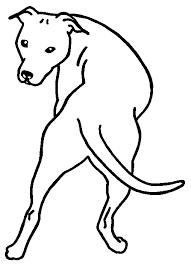Kleurplaten Dieren Pitbull American Stafford Kleurplaten Honden