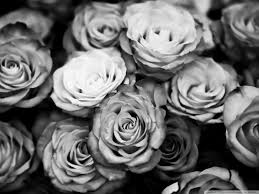 tumblr background black and white flowers. Roses Tumblr Black And White Background Flowers