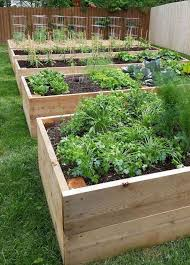 raised garden beds vegetable garden