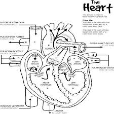 Small Picture Heart Anatomy Printable Coloring Pages body systems Pinterest