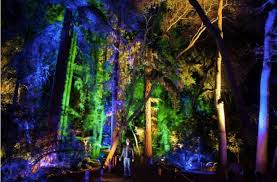 the enchanted forest of light at descanso gardens