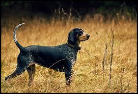 15 best dog breeds for hunting