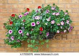 summer bedding flowers in a wall
