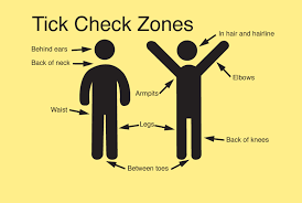 Image result for tick check