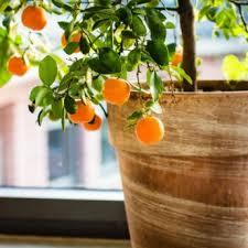 Indoor Cheap Decorative Artificial Orange Tree Artificial Fruit Hybrid Fruit Trees For Sale