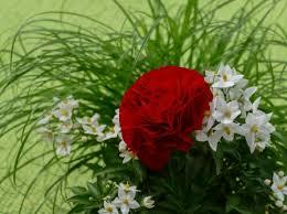 red rose white jasmine flowers