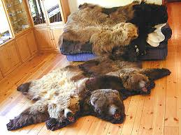 grizzly bear rugs mounts and hides for
