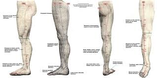 Leg Acupressure Points Chart