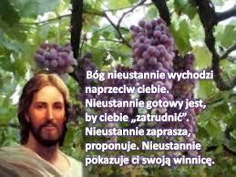 Znalezione obrazy dla zapytania winnica Pańska