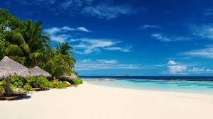 Tropical Beach Palm Trees 4K Desktop ...