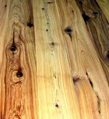 australian cypress sle