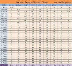 Yorkie Growth Chart Puppy Growth Chart Yorkie Puppy Yorkie