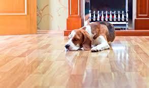 flooring for dogs best flooring for dogs vinyl flooring dog nails