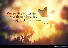Beautiful Like A Butterfly Quotes Best of Butterflies Quotes Quotes About Butterflies YourDictionary