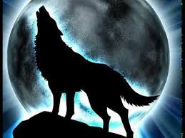 black wolf and white wolf love. Plain White White X Black Wolf Love For Wolf And Love S