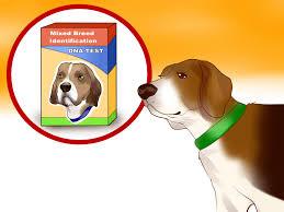 3 Ways To Identify A Beagle Wikihow