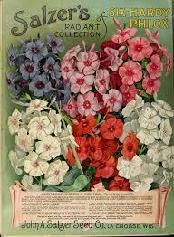 flower garden catalogs 1090 best â 2 vintage plant seed catalogues images